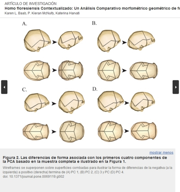 Homo floresiensis Contextualizado Un Karen L Baab Análisis Comparativo morfométrico geométrico de fósiles